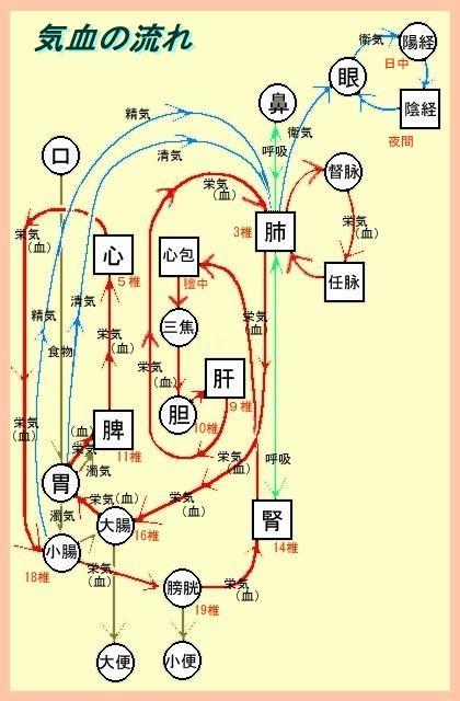 生理(気血の循環)