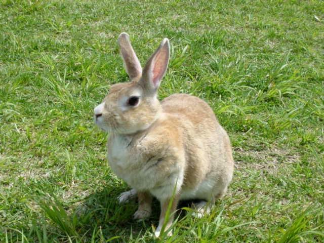 ウサギの画像 p1_5